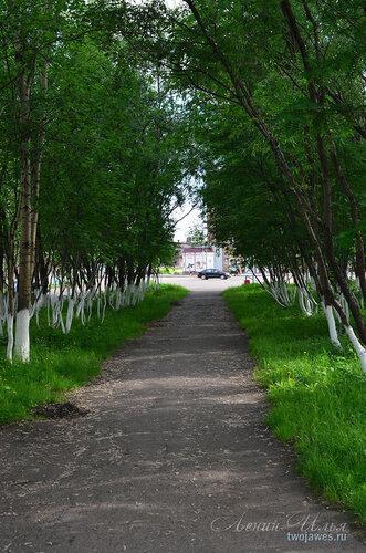 Фотография Инты №7845  Вид в сторону площади Комсомольской недалеко от юго-восточного угла Социалистической 3 21.06.2015_14:55