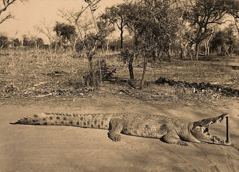 25. Ловля птиц на крокодила