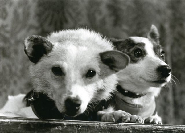 Белка и Стрелка. Автор Кривоносов Юрий, 1960.jpg