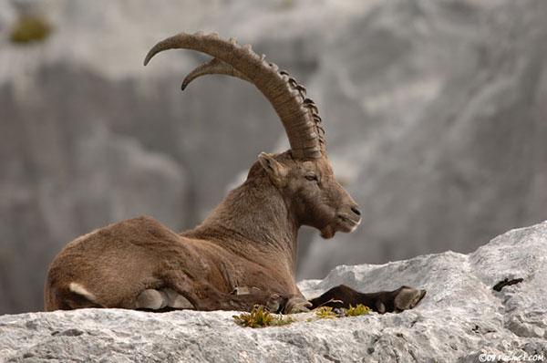 каким будет год козы для змеи