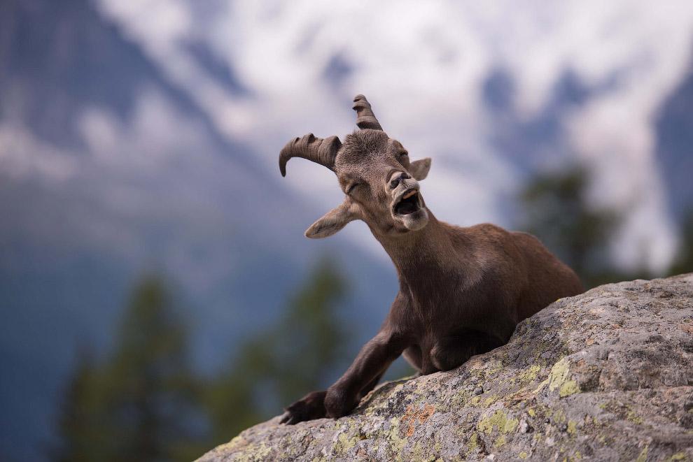 19. Хорошо погулял на выходных. (Фото Tony Murtagh | Comedy Wildlife Photography Awards):