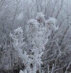 Растишки в снегу