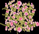 розовые цветы.png