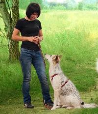 Тренировка взрослых собак в Москве