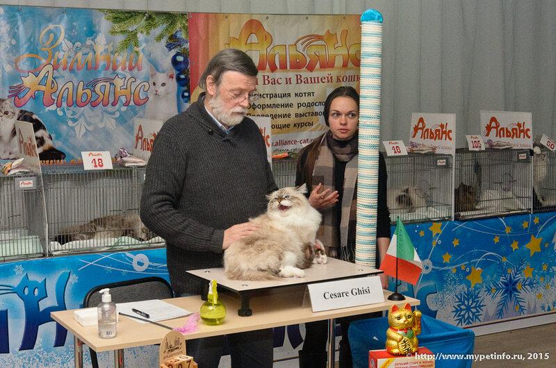"""Выставка кошек """"Зимний альянс - 2015"""""""