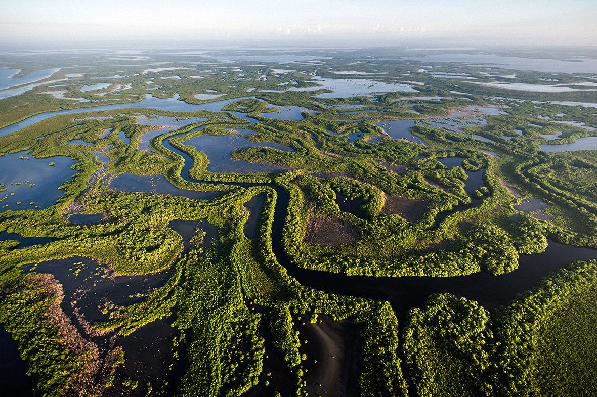 21 Туман в Национальном парке Сьерра-дель-Кристаль — доме для более 100 видов растений-эндемиков.