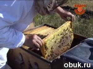 Книга Кривчиков В.В. - Пчеловодство. Диск 11 (обучающее видео)