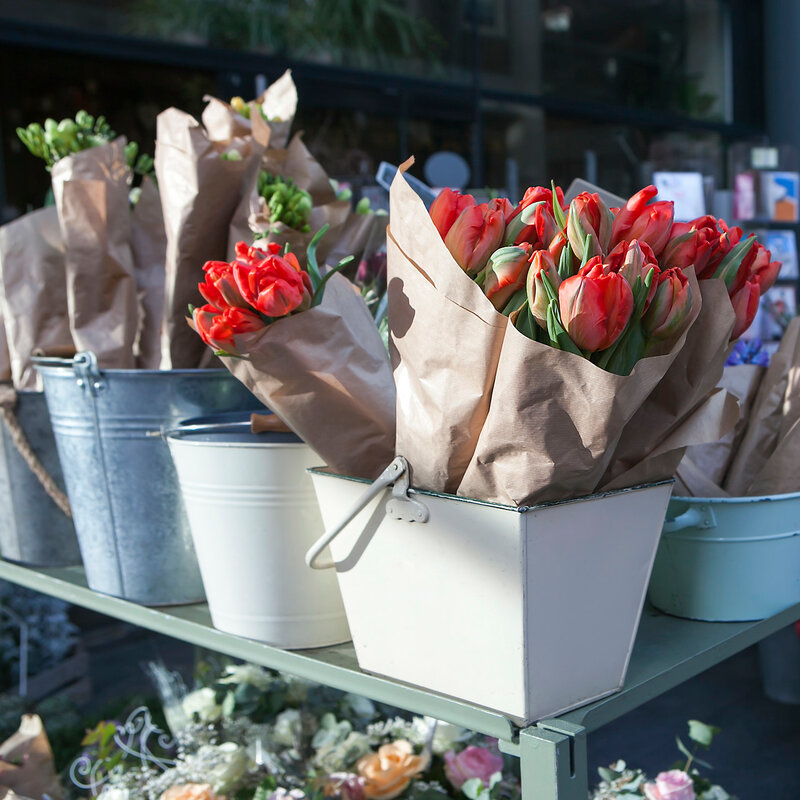 red tulips and blue hyacinths
