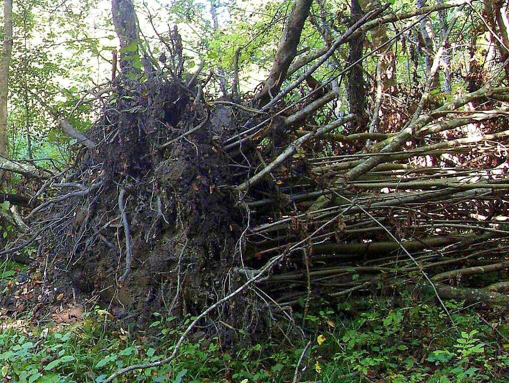 Корни сваленного дерева ... 2008 год, под Горячим Ключом, на Природе (167).JPG