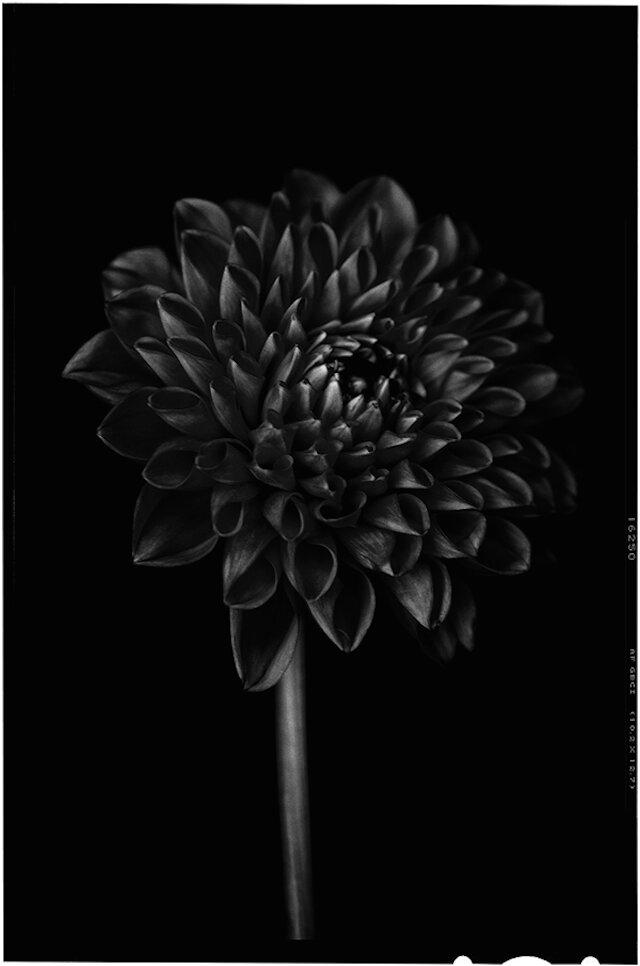 Send no flowers, Bettina Güber.jpg