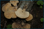 http://img-fotki.yandex.ru/get/15557/15842935.140/0_d0948_ce29e3ce_orig.jpg