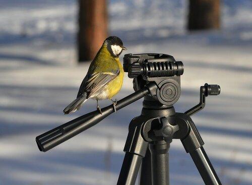 Птичка вылетит в любом случае!