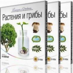 Книга Почемучки и Отчевочки. Растения и грибы