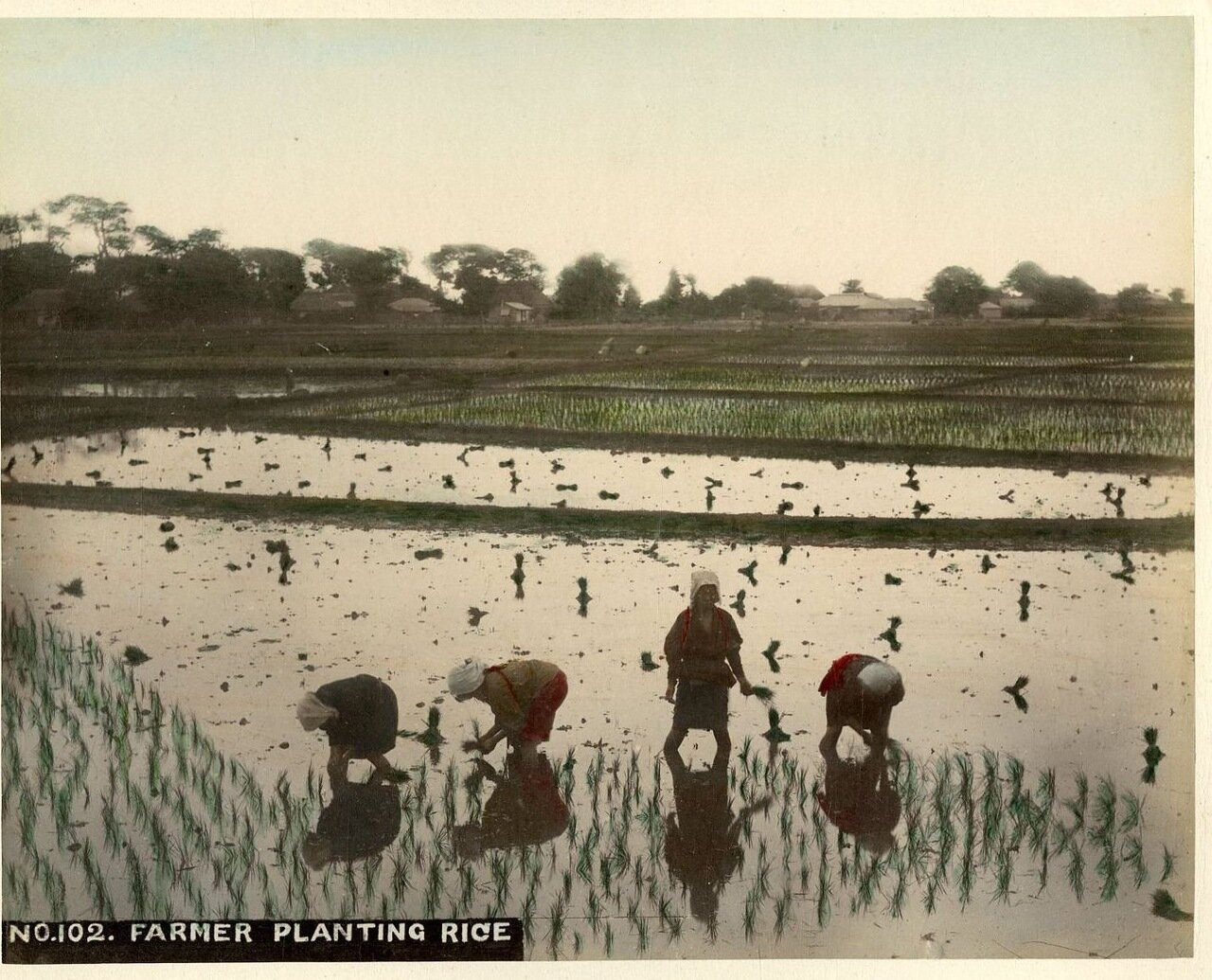 Крестьяне сажают рис