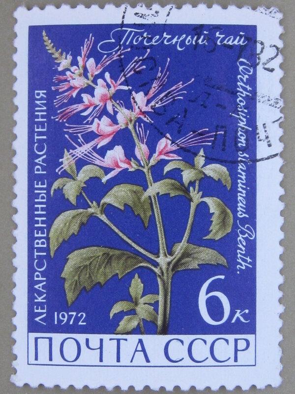 Почечный чай (Orthosiphon stamineus).