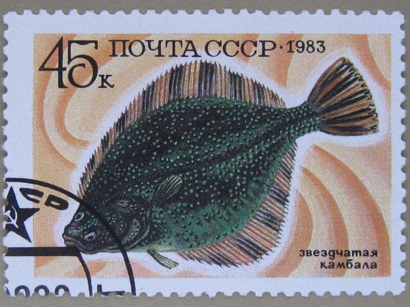 Звездчатая камбала (Plathichthys stellatus).