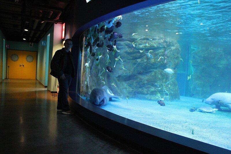 Санкт-петербургский океанариум в санкт-петербурге на марата, 86 - поделился своим мнением пользователь настёна