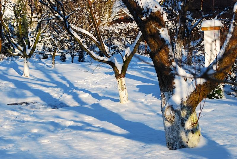 побелка садовых деревьев