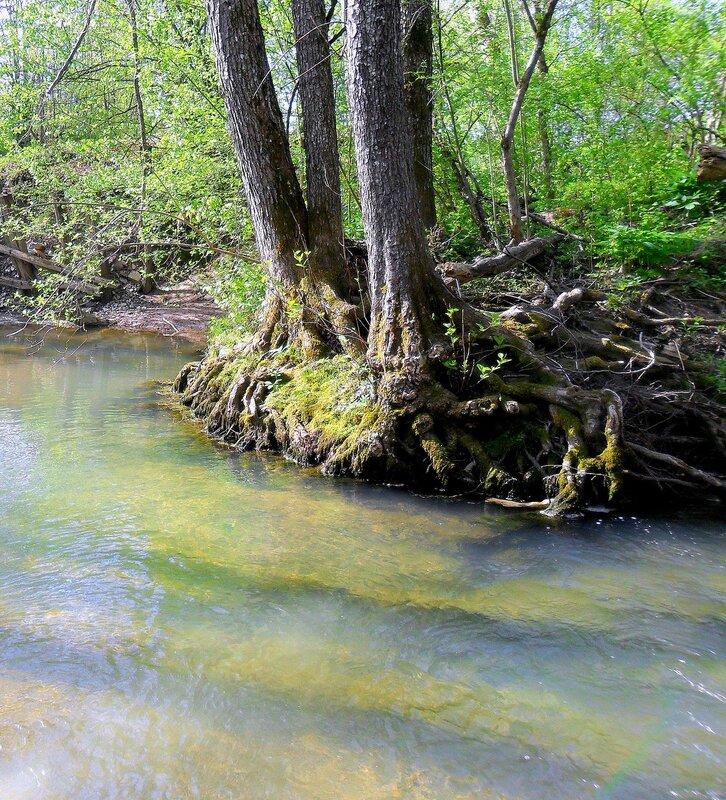 Берег... воды весенние ... SAM_7678.JPG