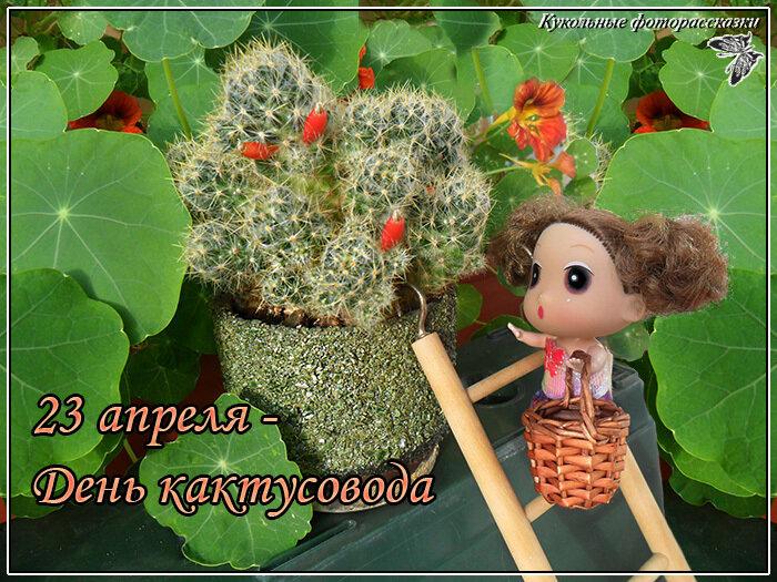 С Днём кактусовода!