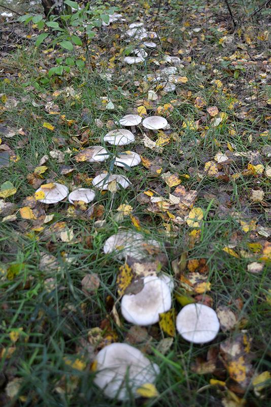 осень15 круги