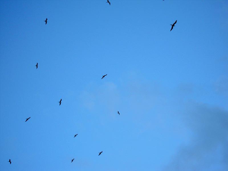 Фрегаты в небе