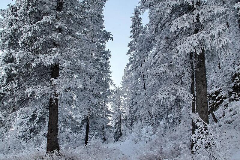 Звучат мелодии зимы... Морозно...