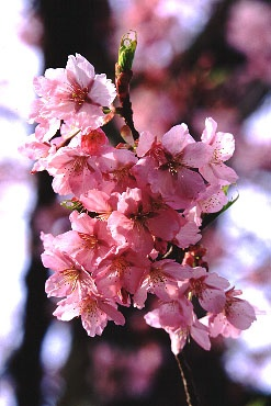 Книга Дышите вместо перекуров или Оргазмичная Весна!!!
