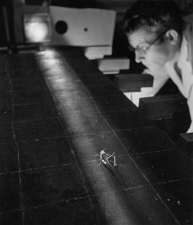 1943. Лаборатория эволюции