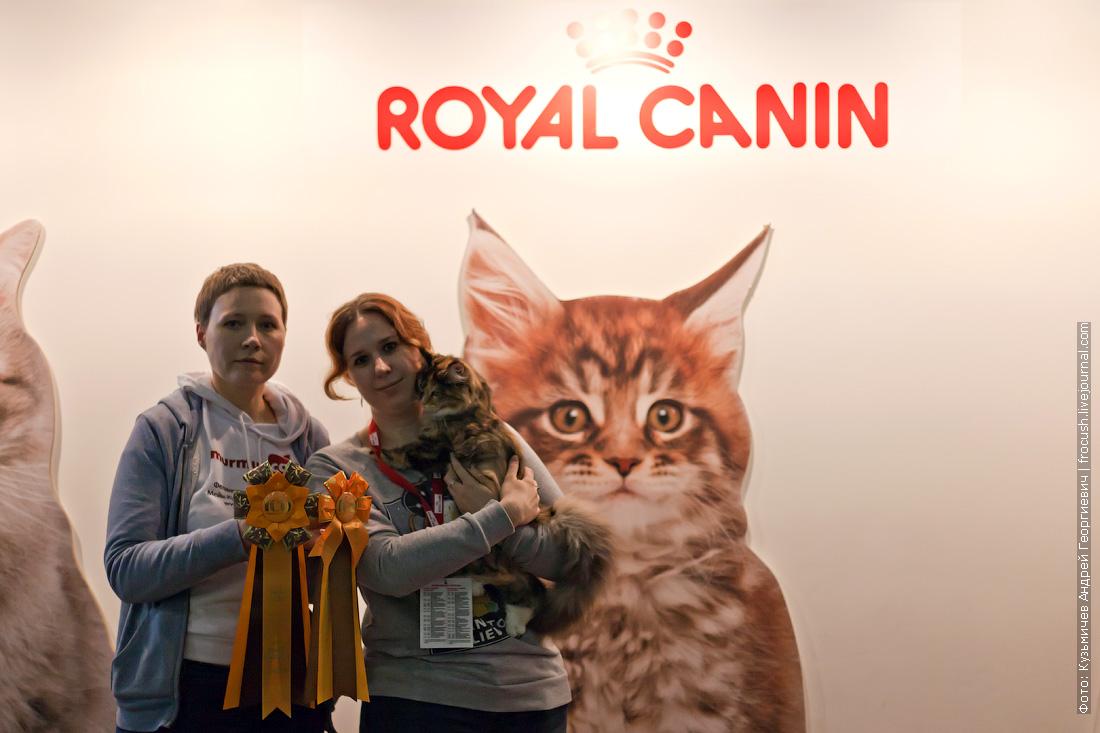Содружество 2014 выставка кошек