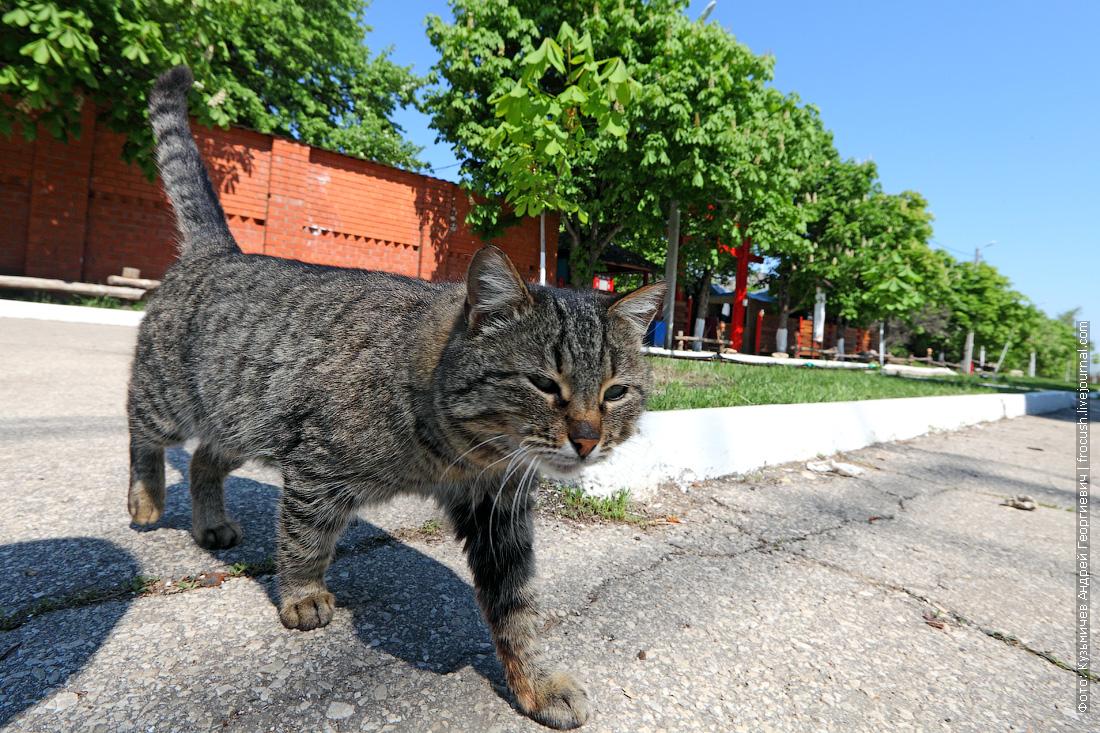 саратовская кошка