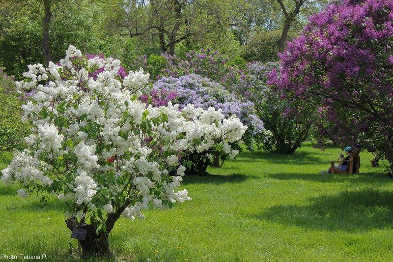 http://www.triinochka.ru Когда цвели сады...