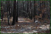 http://img-fotki.yandex.ru/get/15561/15842935.4f/0_c6596_7548dea1_orig.jpg