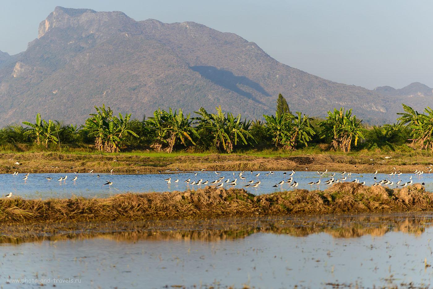 Фотография 23. Великолепное место для фотоохоты. Окрестности города Хуахин. Отзывы об отдыхе в Таиланде (200, 140, 5.0, 1/800)