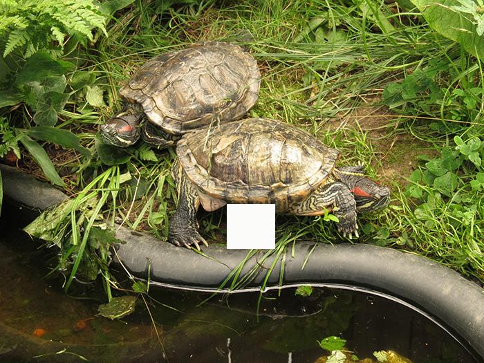 """Что """"снесла"""" черепаха?"""