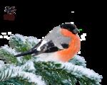 клипарт птица снегирь