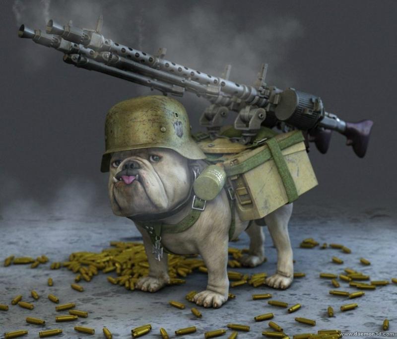 art-красивые-картинки-собака-WarDog-1642825.jpeg