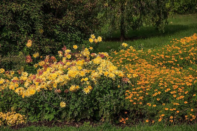 Цветики осенние