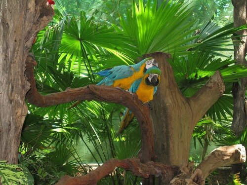 парк птиц.jpg