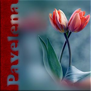 объятия тюльпана.jpg