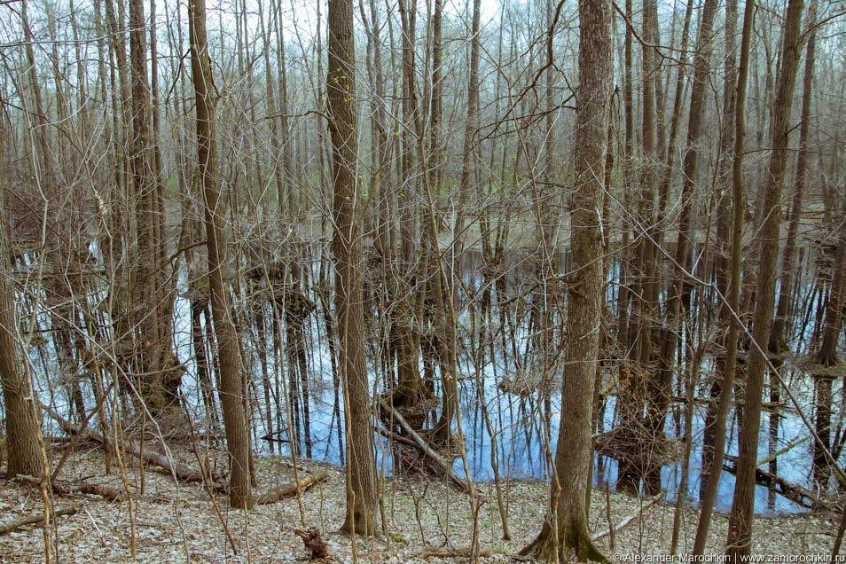 Лес, болото, Кислое