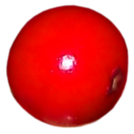 Па́дуб