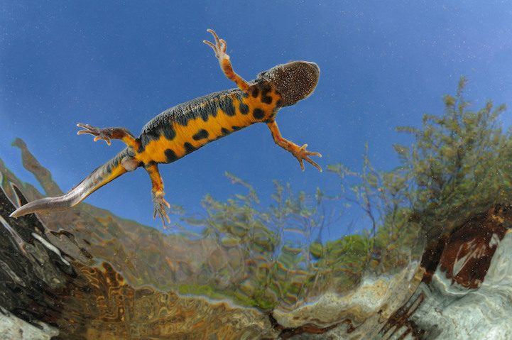 Winners Society of Biology's 2014 Photography Competition80.jpg