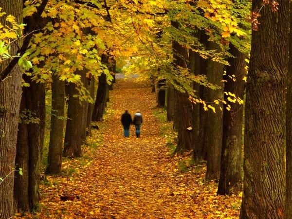 Для чего нужны ежедневные прогулки