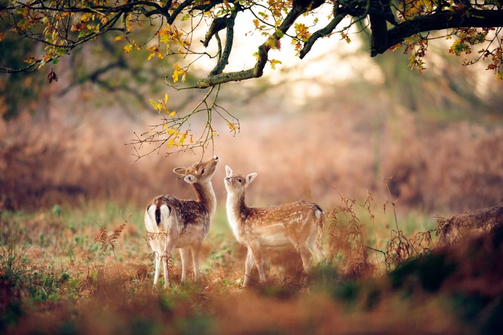 программа восхитительные фото животных рассвет частная