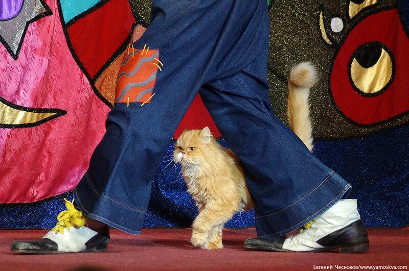 Осень. Театр кошек. ДИНАСТИЯ. 15.10.15.16..jpg