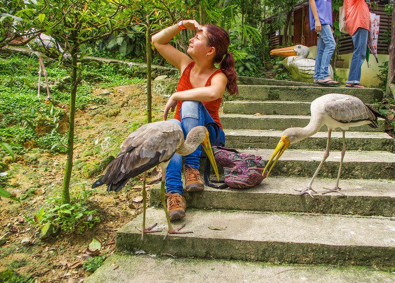 В парке птиц