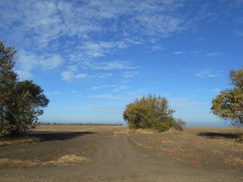 К морю дорога средь полей ... DSCN1681.JPG