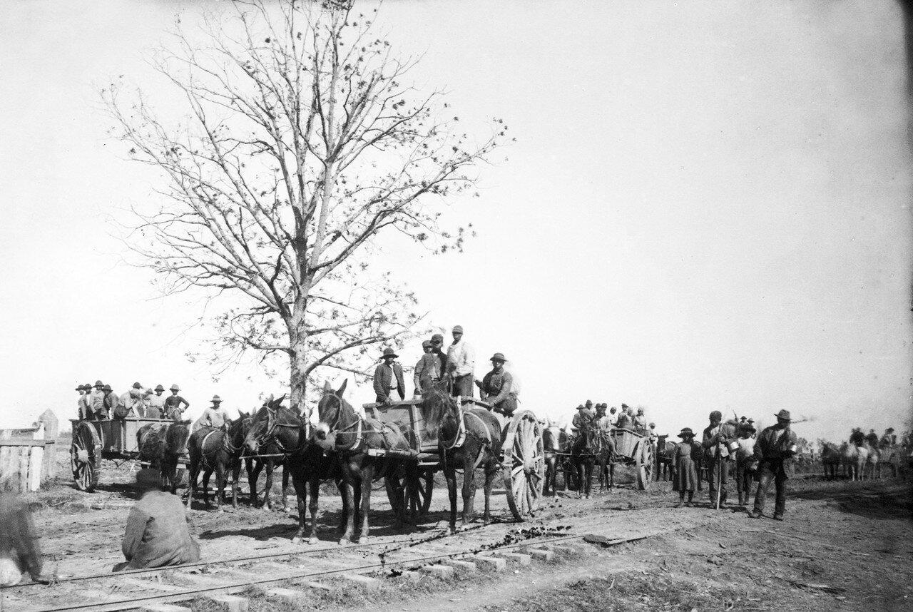 1884. В Новом Орлеане