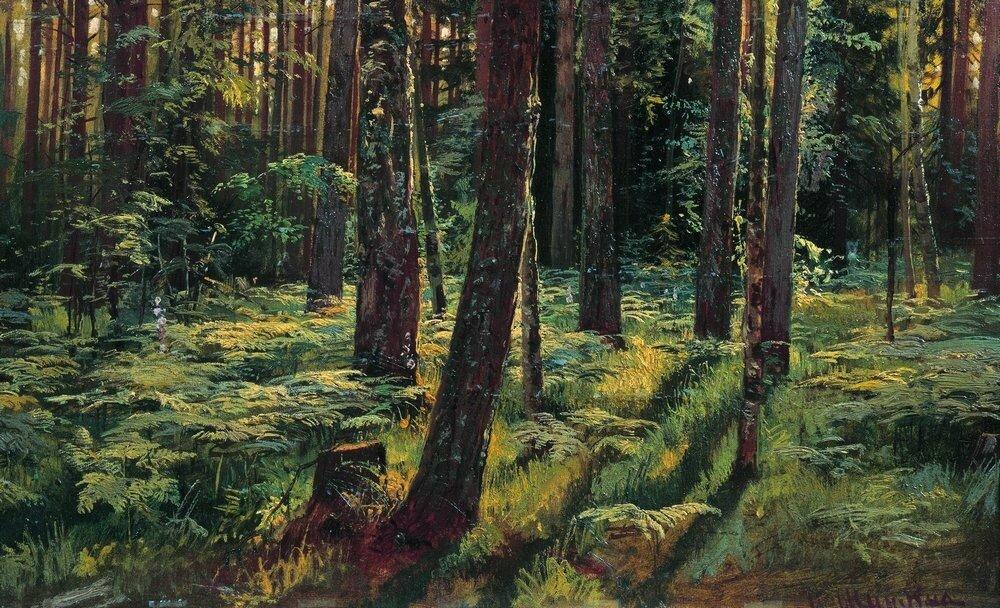 Папоротники в лесу.Сиверская 1883 36,2х59.6.jpg